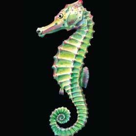 the-seahorse-thumbnail