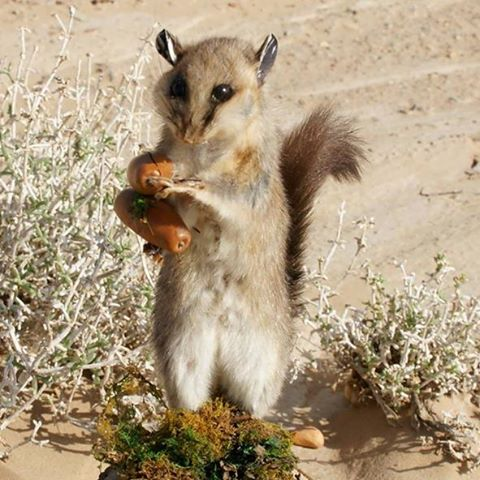 the-squirrel-thumbnail