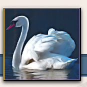 the-swan-with-two-nicks-thumbnail