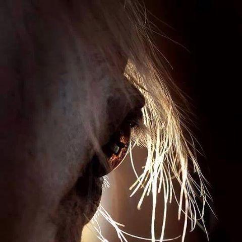 arabian-horse-thumbnail