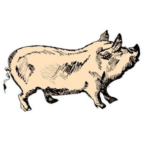 the-tipsy-pig-thumbnail