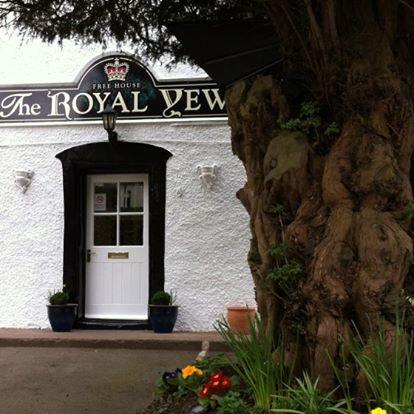 royal-yew-thumbnail