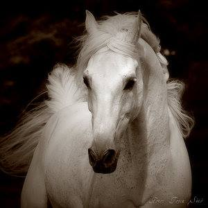 the-white-mare-thumbnail