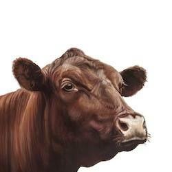 the-dun-cow-thumbnail