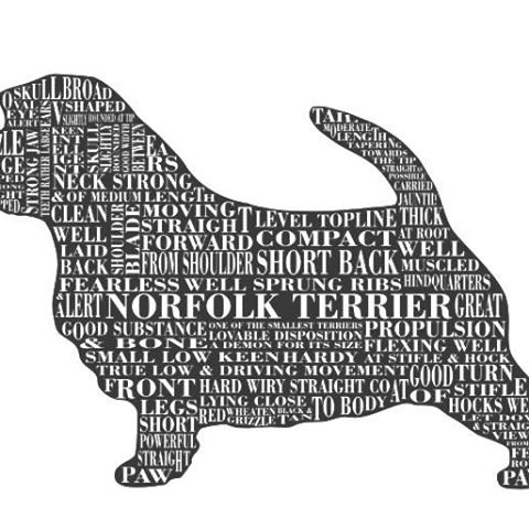 norfolk-terrier-thumbnail